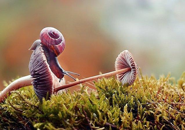 Le monde merveilleux des escargots, ça existe!