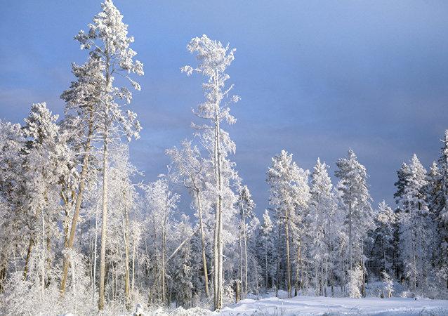 La taïga en hiver