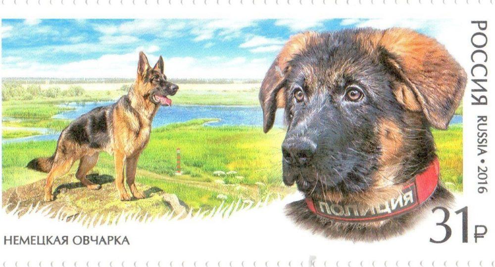 Le chiot Dobrynya fait son apparition sur un timbre russe