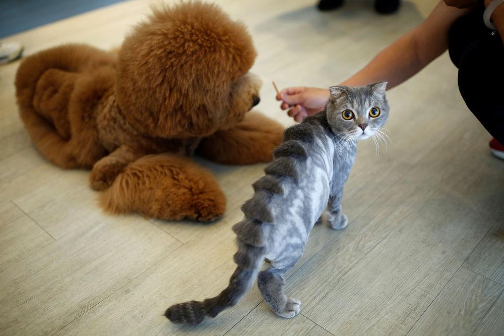 Un chat et un chien après le toilettage dans un salon de coiffure pour les animaux à Taiwan