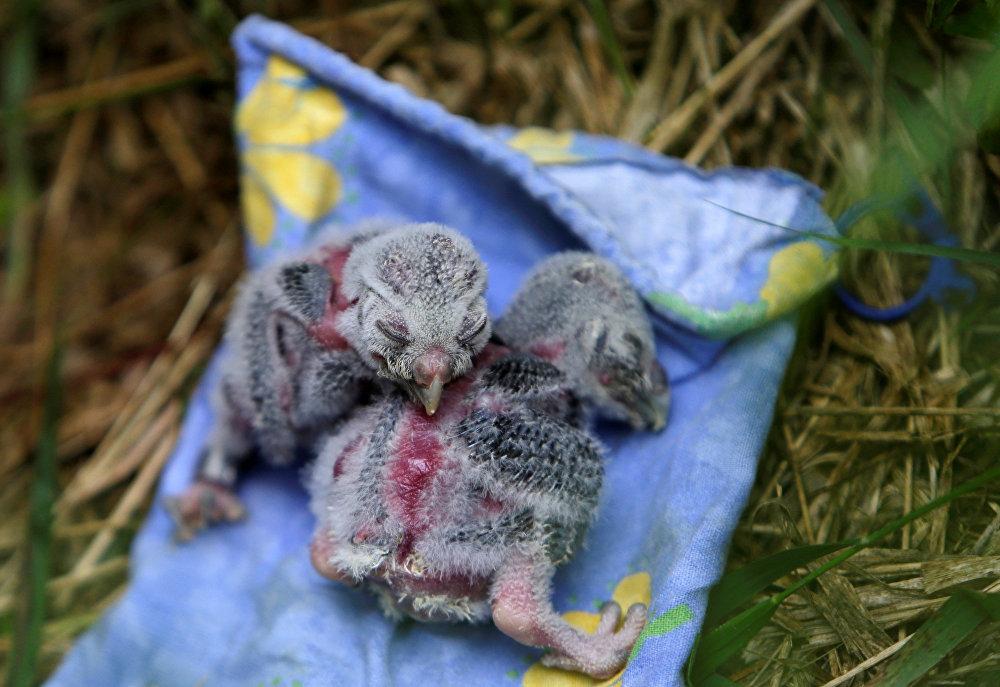 Deux bébés hibou du parc de la ville tchèque de Mikulov