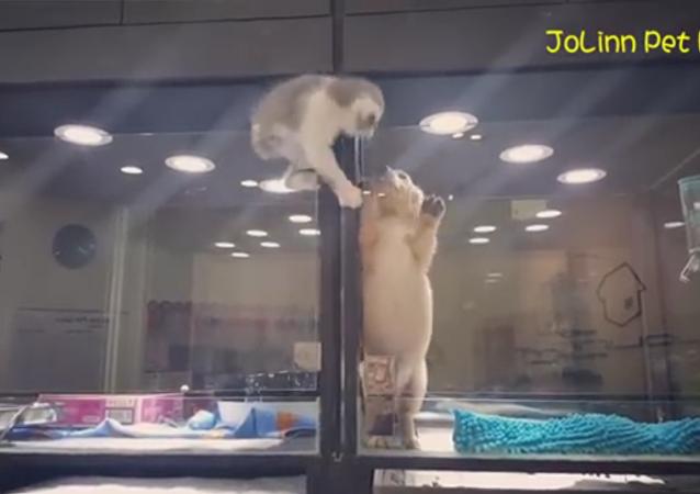 Un chaton s'enfuit de sa cage pour jouer avec son ami – un chiot