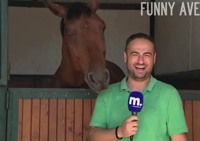 Un cheval interrompt un reportage