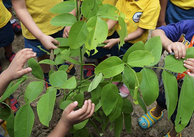 En Inde, près de 50 M d'arbres plantés en un seul jour