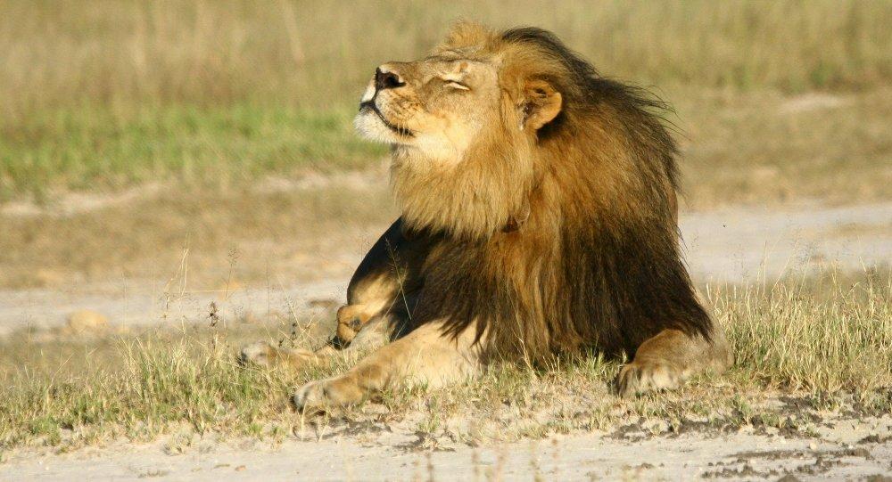 Assez Un touriste filme l'assaut d'un lion contre une voiture en Afrique  WE54