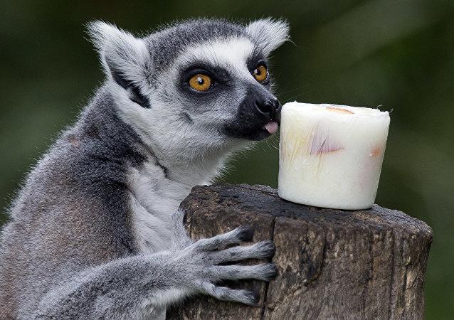 Les restes du plus vieux primate du monde retrouvés en Inde