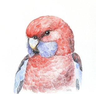 La nature est notre maison et c'est à nous de la sauvegarder, c'est ce que Sofiya Shukhova nous montre, dévoilant la beauté et l'unicité de chaque animal. Il existe plusieurs voies possibles pour contribuer à la conservation des espèces sauvages et je choisis la mienne, affirme la jeune artiste. Découvrez plus de travaux sur sa page Facebook!