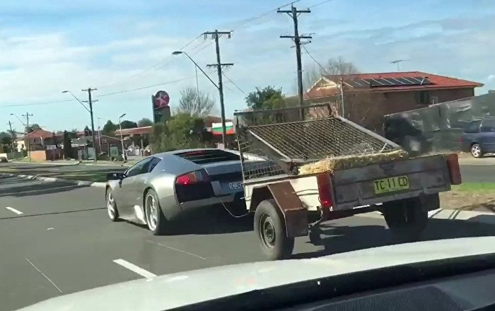 Lamborghini murcielago with goats in the trailer!