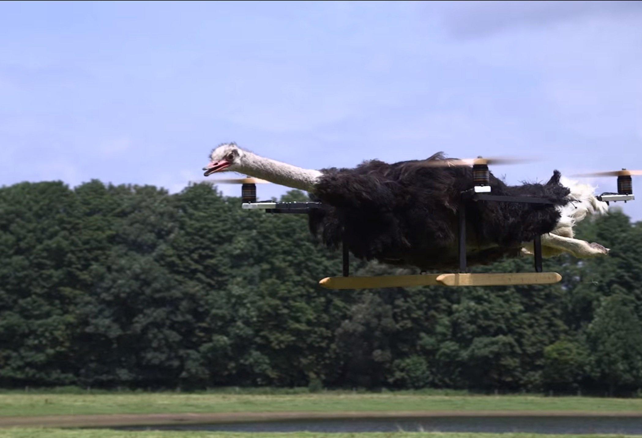 Un drone fait à partir d'un autruche mort