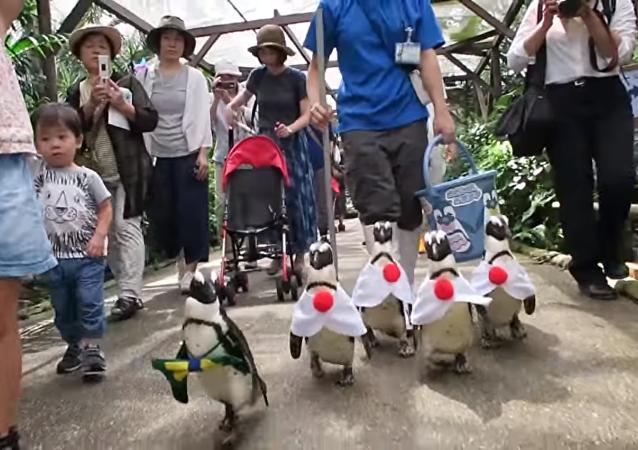 Pingouins déguisés aux couleurs de l'uniforme des sportifs japonais