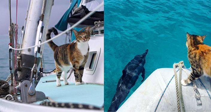 La Journée internationale des chats, avec capitaine Clark et son félin maritime