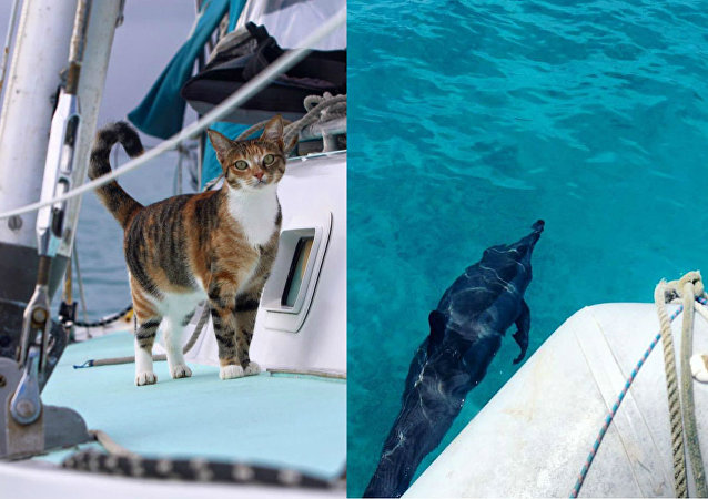 La Journée internationale des chats, avec capitaine Clark et son félin maritime