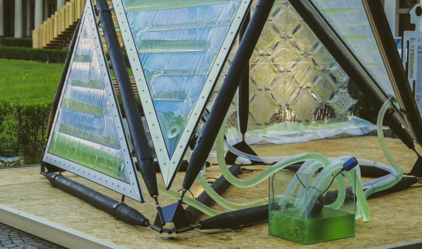 Canopée Urbaine Algae