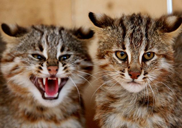 Des chats sauvages, tellement beaux et arrogants