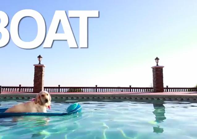 Un chien à bord, la meilleure vidéo