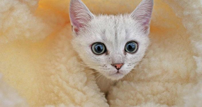 Chacun cherche son chat… sur Internet