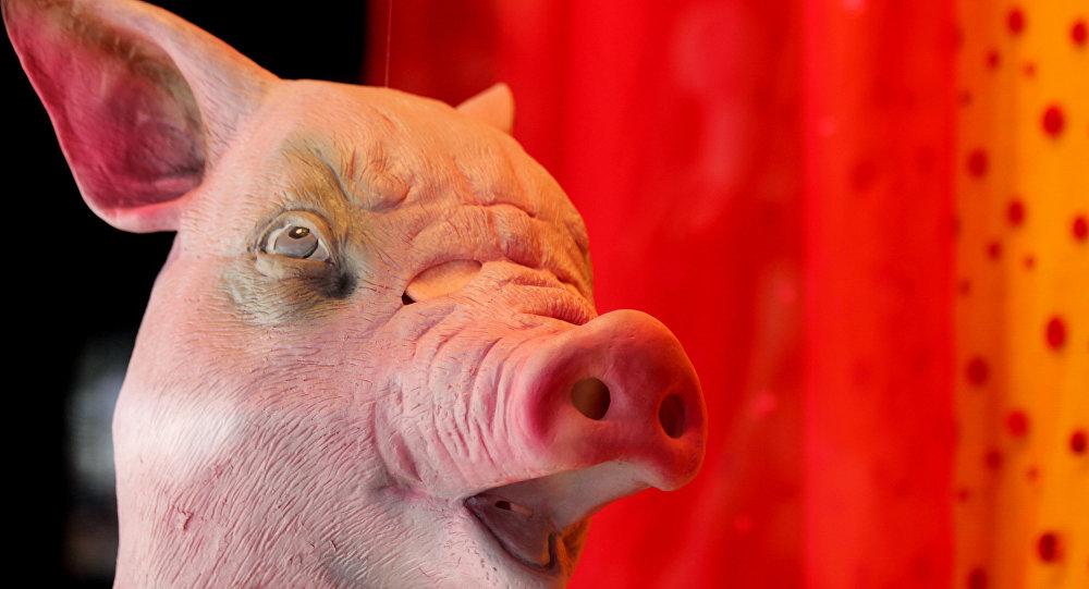 têtes de porc