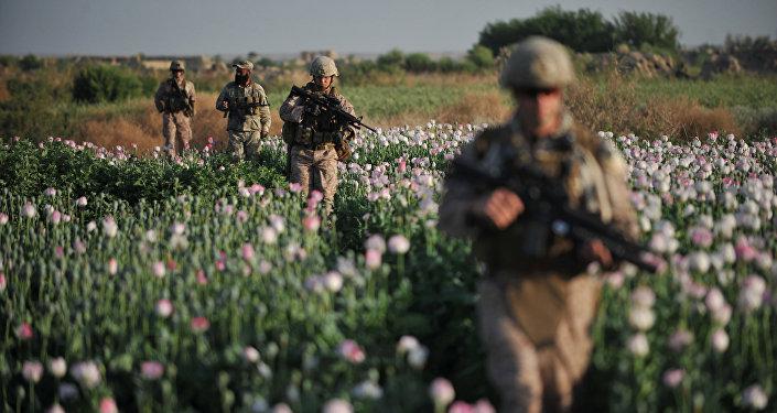 Encore plus d'opium «taliban» en Afghanistan
