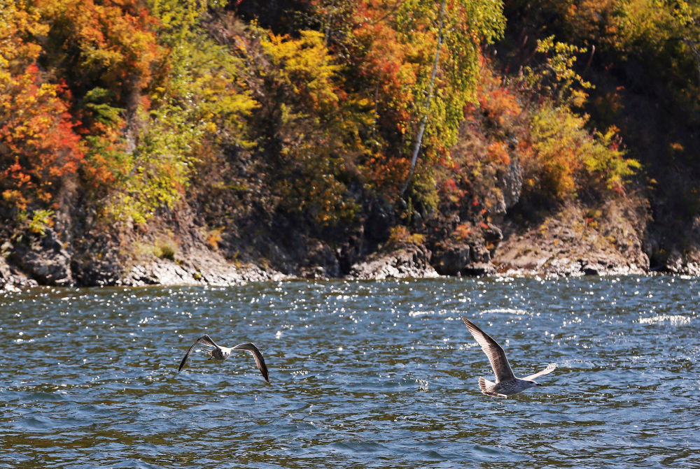 Les paysages splendides du fleuve d'Ienisseï