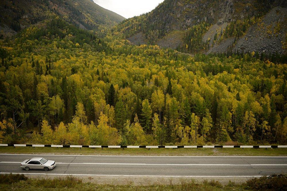 L'automne doré dans l'Altaï