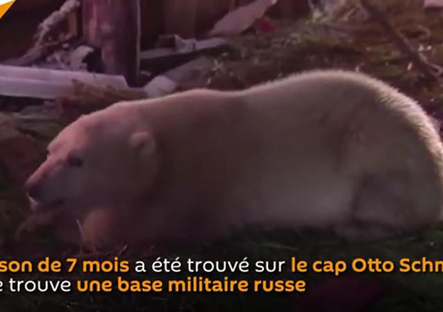 Sauvetage d'un petit ours blanc par des militaires russes