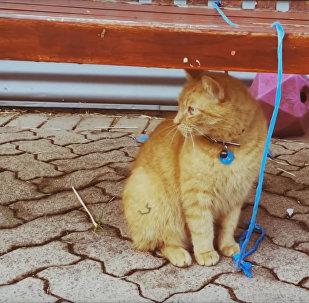 Bobo, ce chat qui travaille depuis 9 ans sans un jour de congé