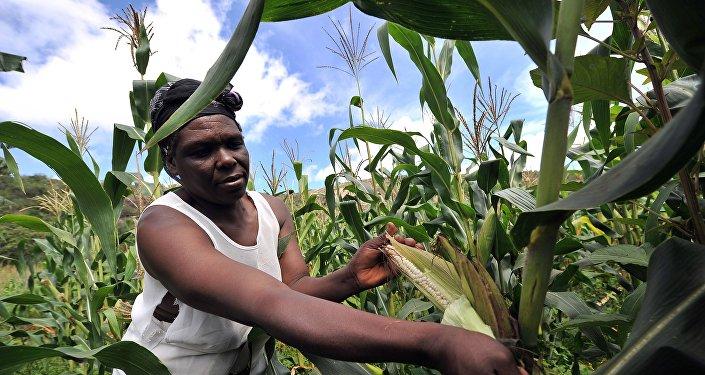 La Chine veut relancer l'agriculture au Zimbabwe
