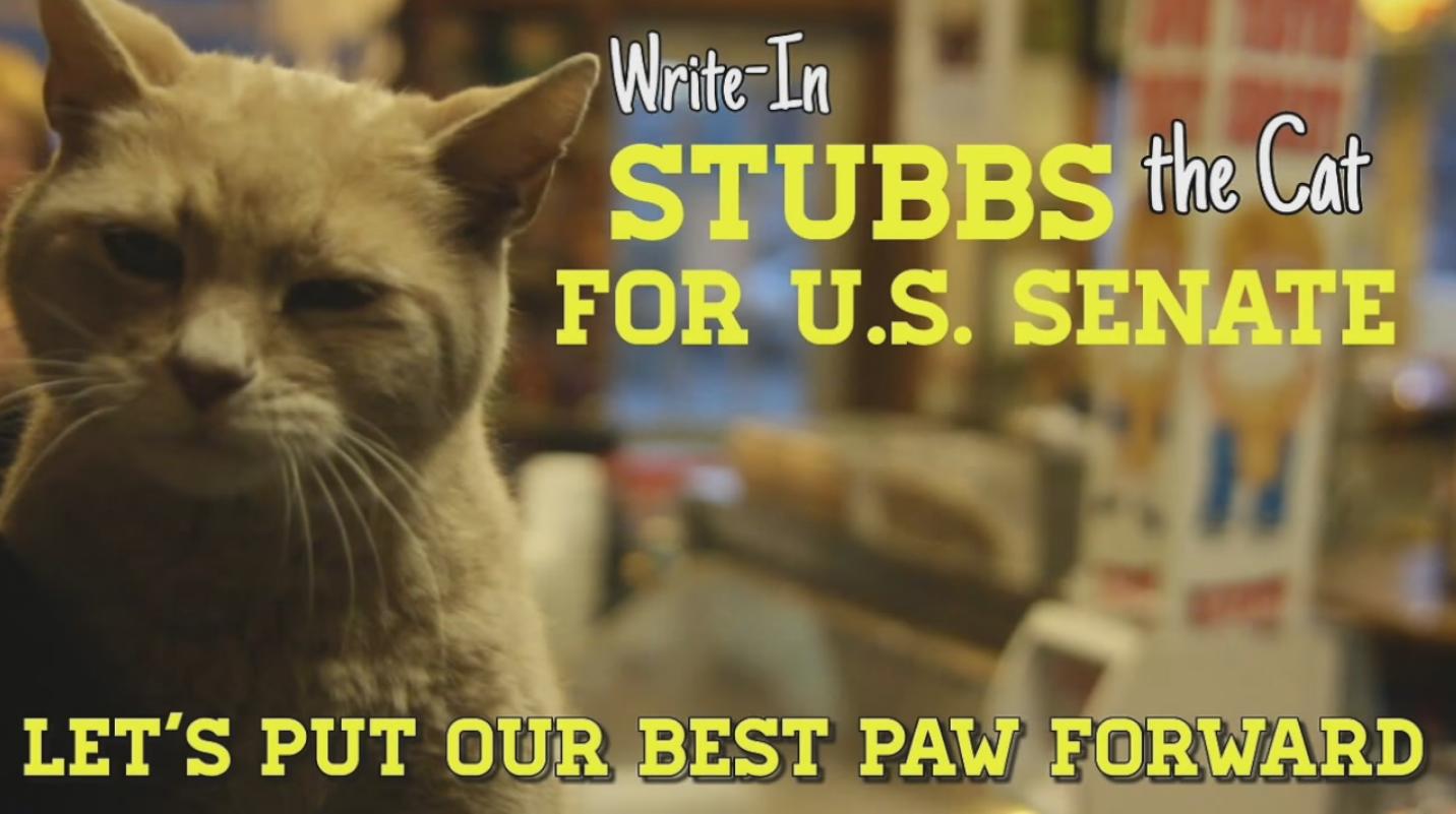 Le chat Stubbs