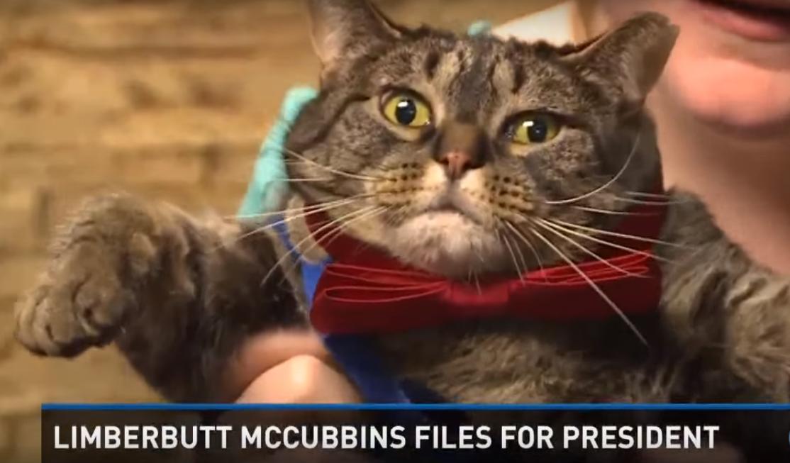 McCubbins, chat politique
