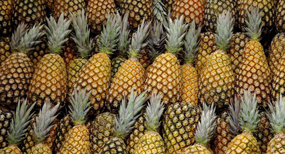 Espagne : 67 kg de cocaïne découverts dans... des ananas