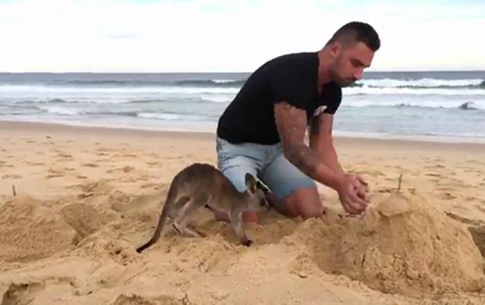 Quand votre kangourou est votre meilleur ami…