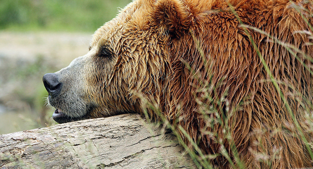 l`ours