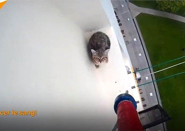 Sauvetage d'un chaton bloqué sur le rebord d'une fenêtre au 12e étage