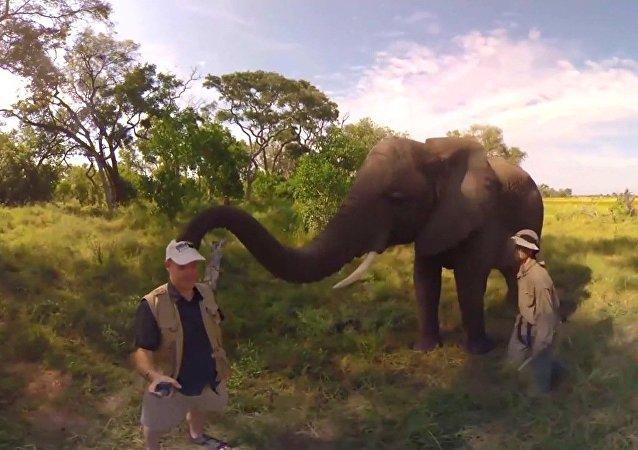 Un éléphant enlève la casquette d'un guide