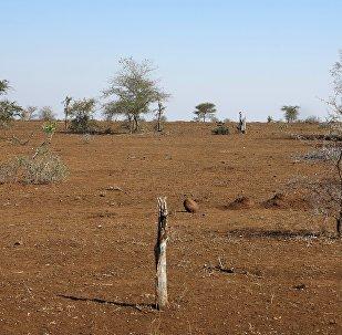 Sécheresse en Afrique