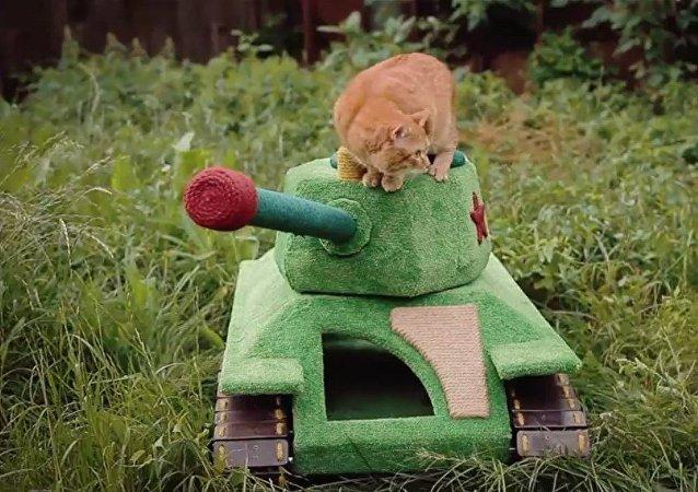 Un tank pour chats