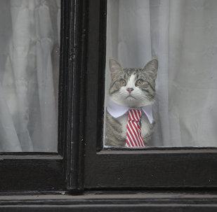 Le chat de Julian Assange