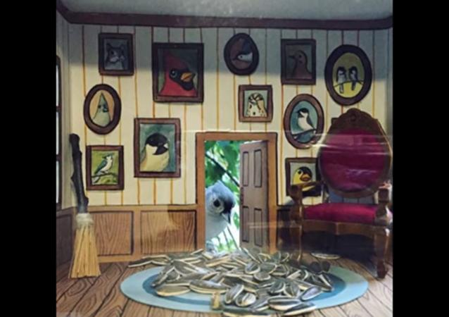 Les mangeoires-maisons pour les oiseaux