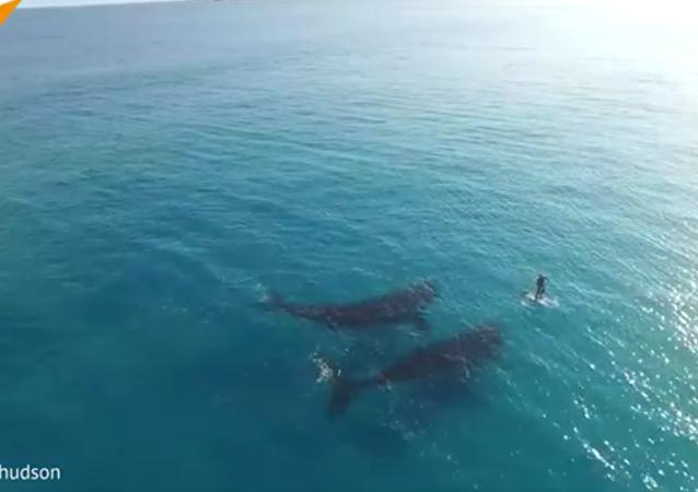 Nager avec des baleines: une expérience magnifique!
