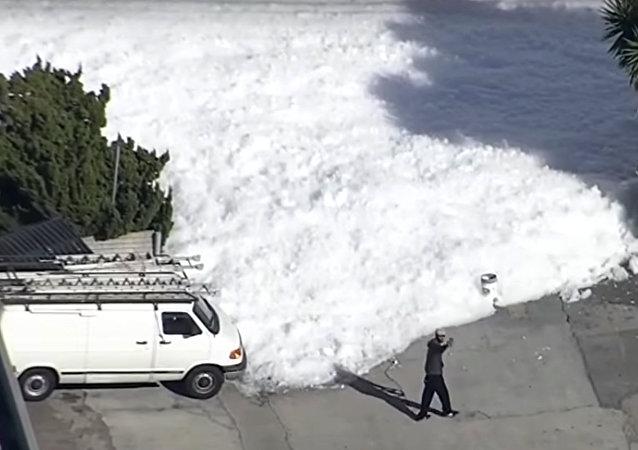 La ville californienne de Santa Clara a connu une véritable invasion de mousse