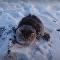 Sauvetage d'un chat coincé dans la glace