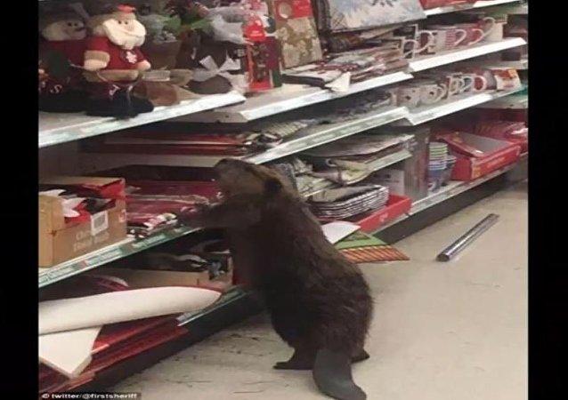 Les castors font aussi leurs courses de Noël!