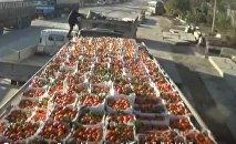 Des tonnes d'agrumes en don aux habitants d'Alep-Est