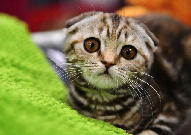 Un chaton, image d'illustration