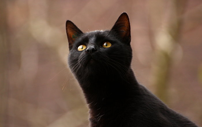chat premier mondial Chambéry