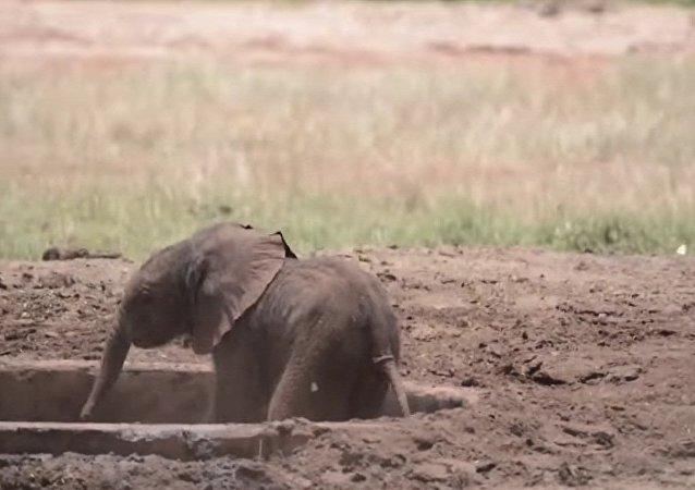 Opération de sauvetage d'un bébé éléphant