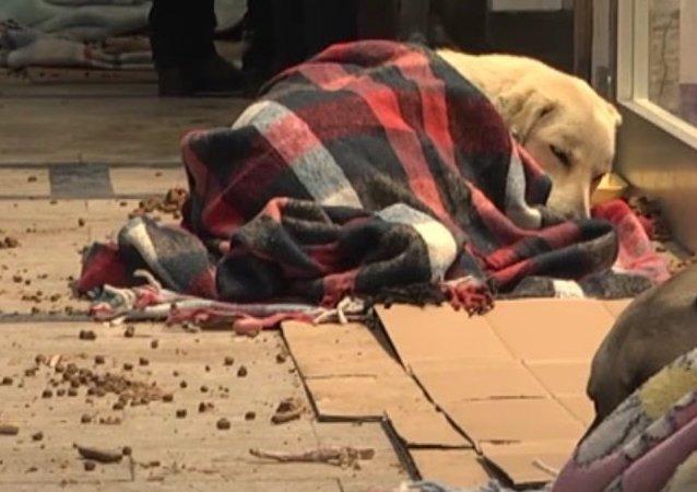 Un centre commercial d'Istanbul se transforme en refuge pour les animaux