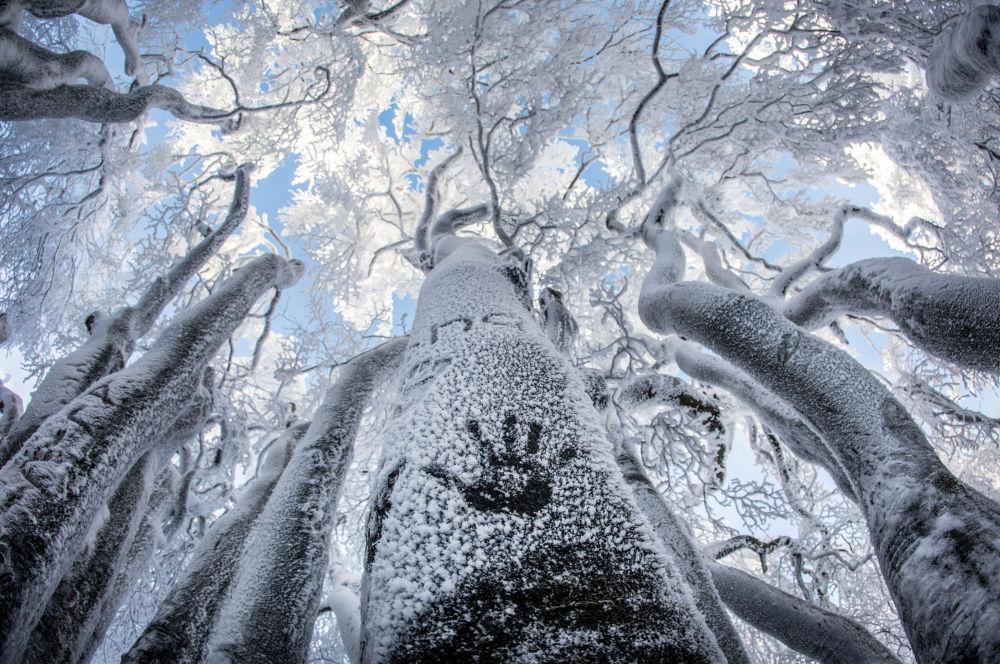 Des arbres sur la montagne-Grosser Feldberg, en Allemagne