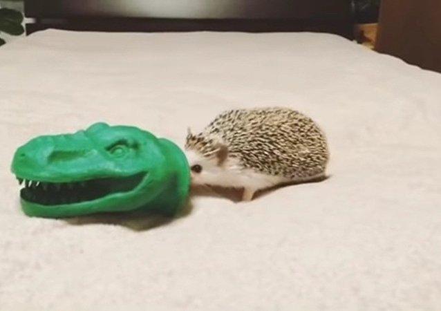 Découvrez le terrible «Hérissonosaure»