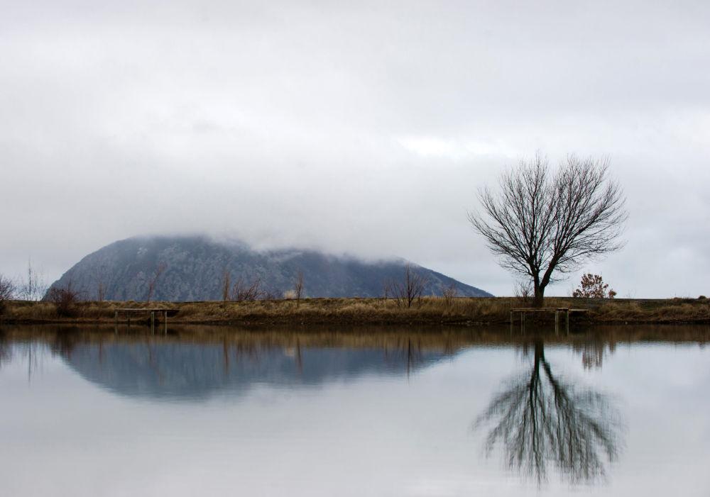 Un arbre  dans le village Krasnokamenka, en Crimée